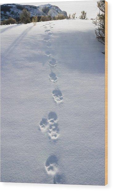 Fresh Wolf Tracks In Yellowstone Wood Print