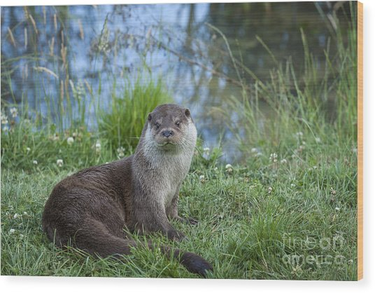 Friendly Otter Wood Print by Philip Pound