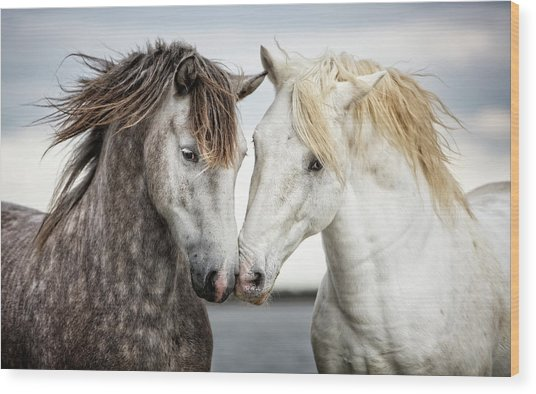 Friends Iv - Colour Wood Print by Tim Booth