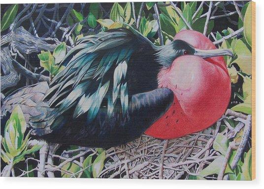 Frigate Bird  Wood Print