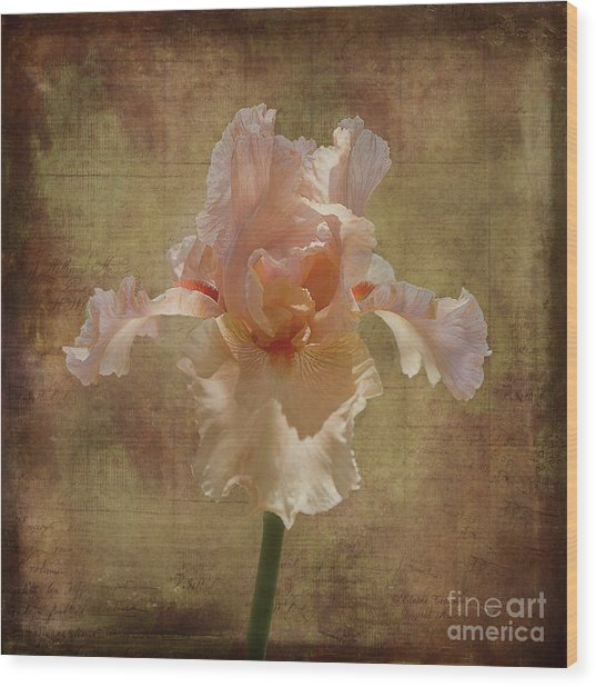 Frilly Iris Wood Print