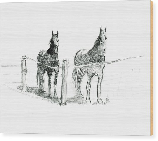 Friesian Horses Wood Print