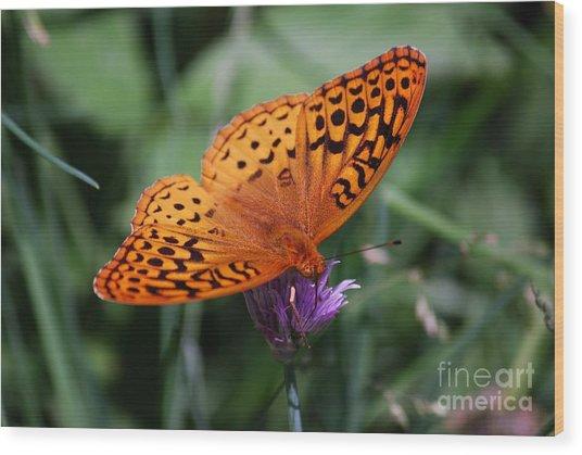 Fritillary Wings Wood Print