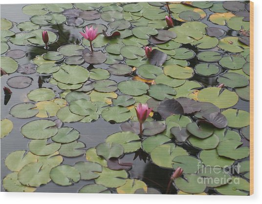 Frog Gardens Wood Print by Amy Holmes