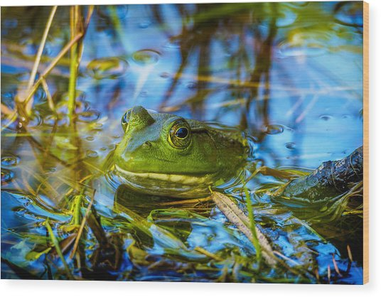Frog In My Pond Wood Print