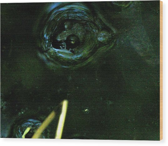 Frog In Pond 2 Wood Print by Jennifer Pevos