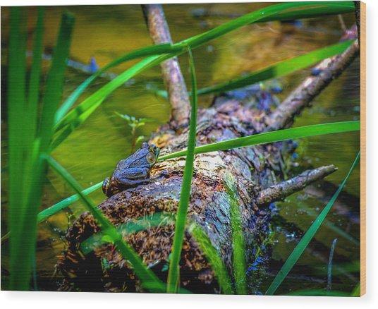 Frog On A Log 1 Wood Print