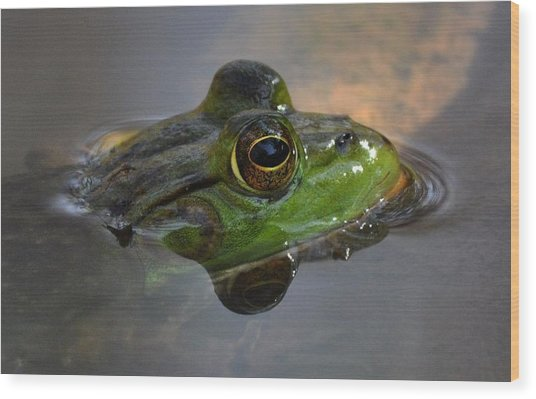 Frog On A Mission Wood Print by Monteen  McCord