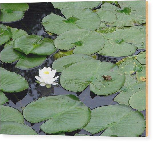 Frog On Lily Pad Wood Print