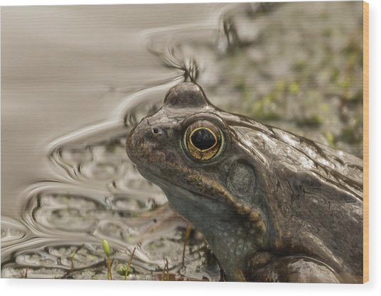 Frog Portrait Wood Print