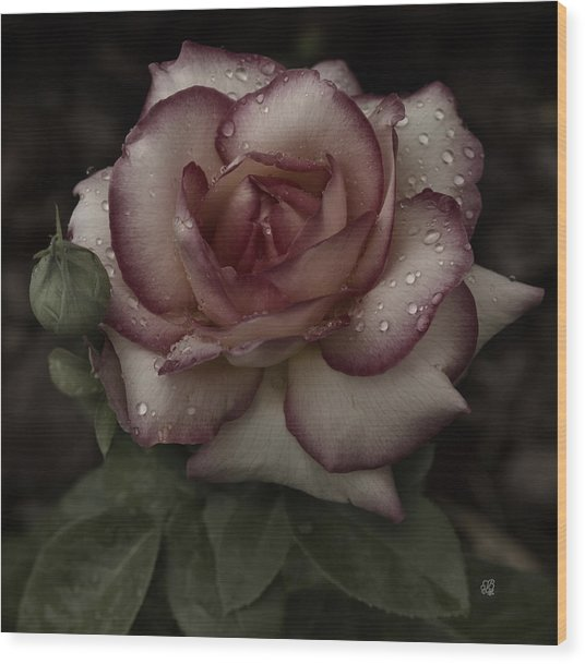 From Me To You Winter Rose Wood Print