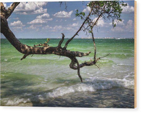 From Sanibel To Fort Myers Wood Print