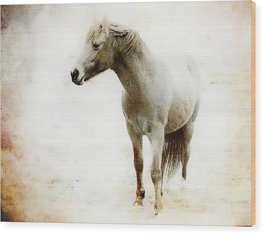 From The Scrapbook Zibs The Pony Wood Print