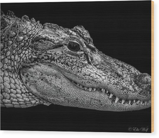 From The Series I Am Gator Number 9 Wood Print