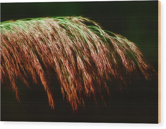 Fronds Forever Wood Print by Ross Powell