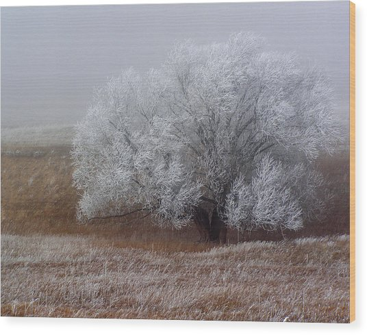 Frost And Fog Wood Print