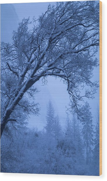 Frost Blue Wood Print by Vincent James
