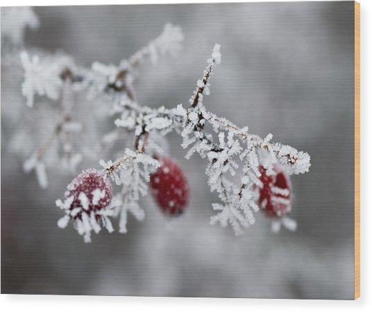 Frost Wood Print by Frank Tschakert