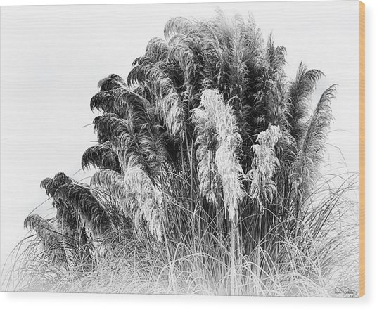 Wood Print featuring the photograph Frost On The Pampas Grass by Dee Browning