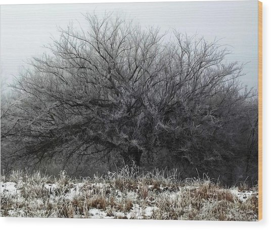 Wood Print featuring the photograph Frosted Elm by Shelli Fitzpatrick