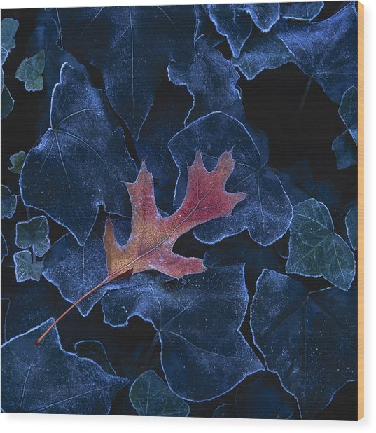 Frosted Leaf And Ivy Wood Print