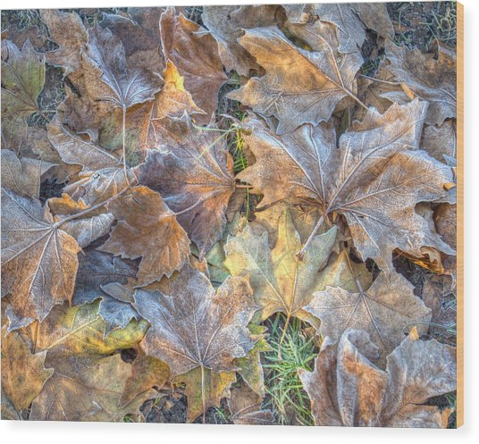 Frosted Leaves 8x10 Wood Print