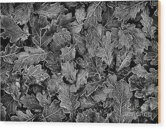 Frosted Oak Leaves Pattern Wood Print