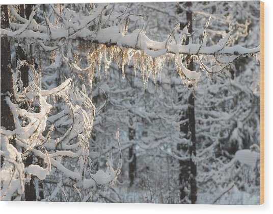 Frosted Pine Branches Wood Print