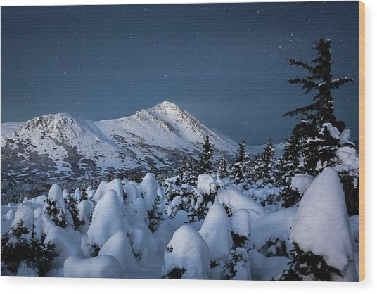 Frosty False Omalley C Wood Print