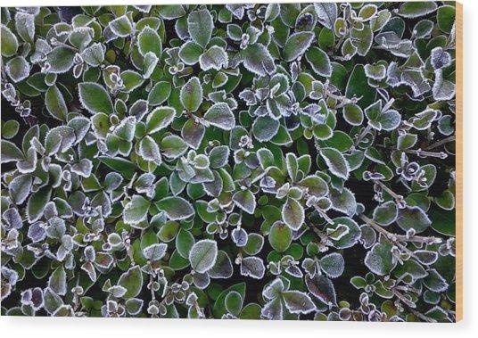 Frosty Hedgerow Wood Print