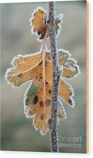 Frosty Leaf Wood Print