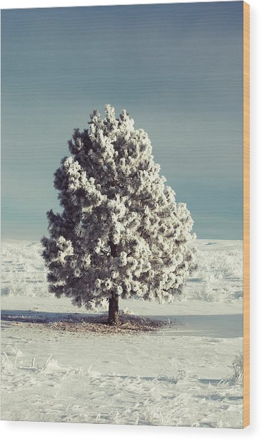 Frosty The Tree Wood Print