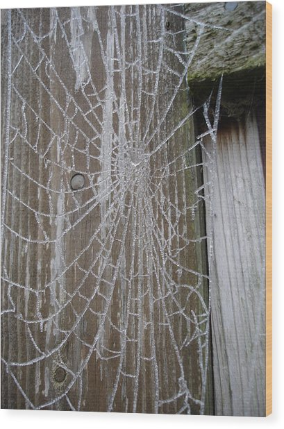 Frosty Web Wood Print
