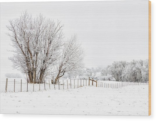 Frosty Winter Scene Wood Print