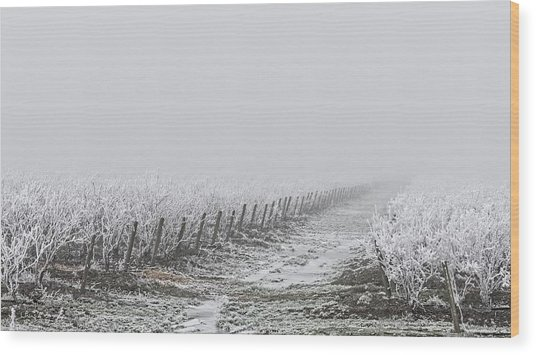Frozen Blueberry Mist Wood Print