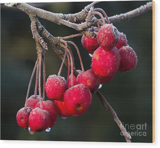 Frosted Apples Wood Print