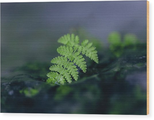 Frozen Fern II Wood Print