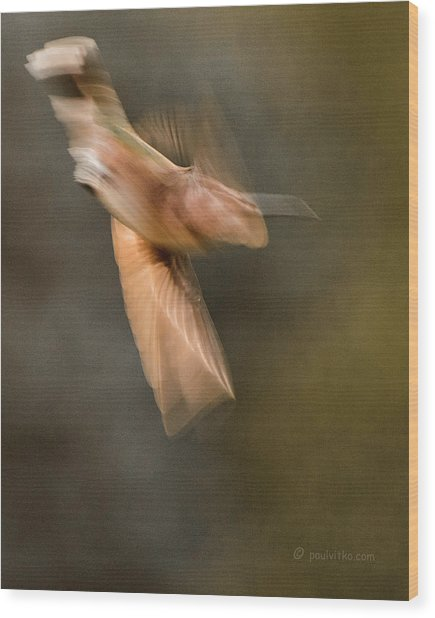 ...frozen Flight Hummingbird.... Wood Print