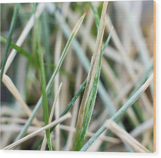 Frozen Grass Wood Print