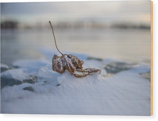 Frozen Leaf On Lake Reno Wood Print