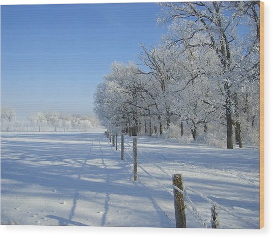 Frozen Mystery Wood Print by Jessica Yudis
