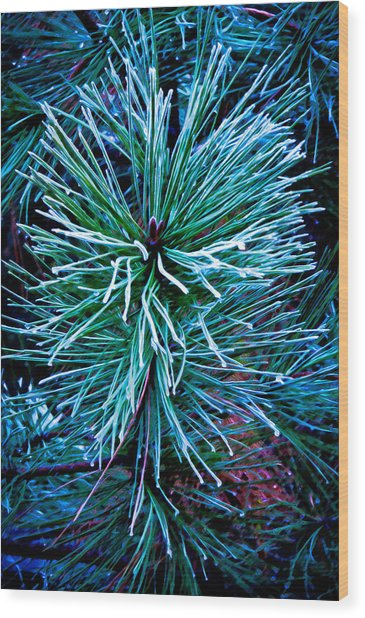 Frozen Pine Needles  Wood Print