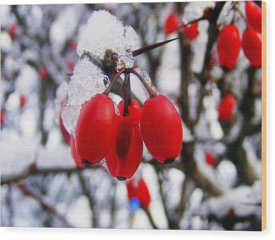 Frozen Red Berries Wood Print