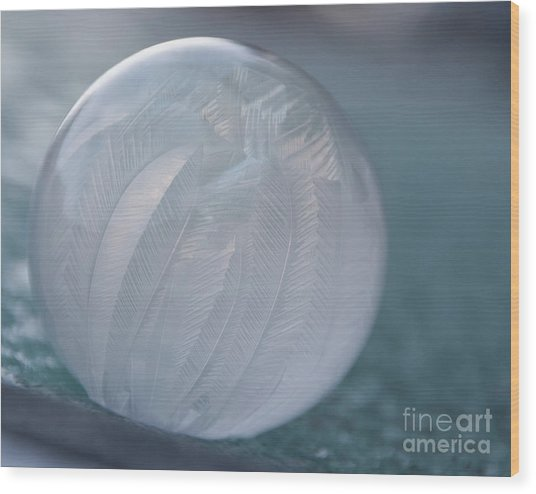 Frozen Soap Bubble -georgia Wood Print