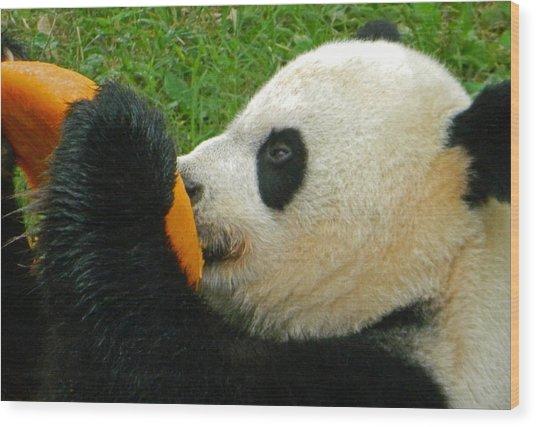 Frozen Treat For Mei Xiang The Giant Panda Wood Print