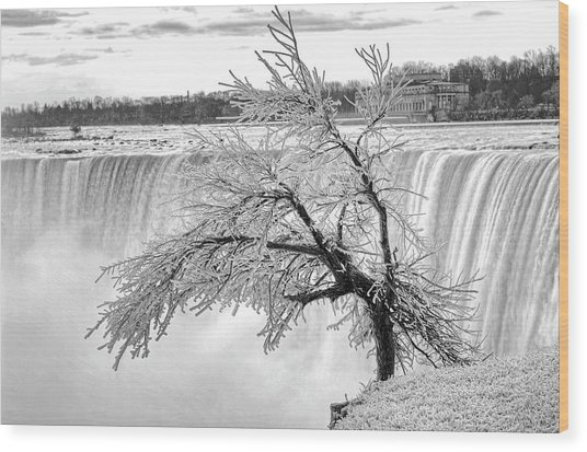 Frozen Tree Near Niagara Falls Wood Print