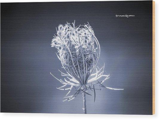Wood Print featuring the photograph Frozen Wildflower by Stwayne Keubrick