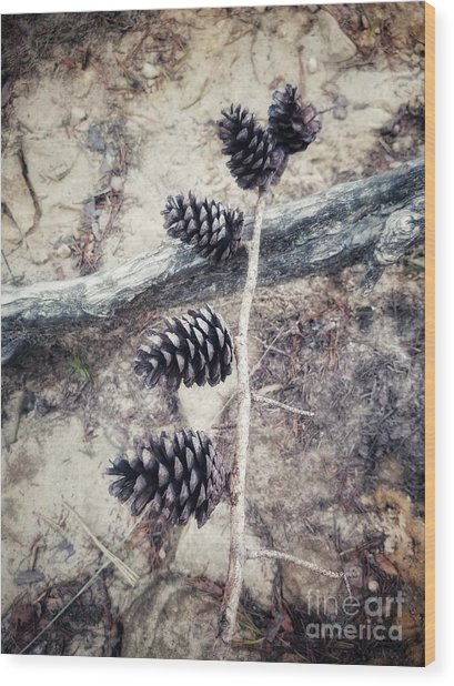 Fruit Of The Pine Wood Print