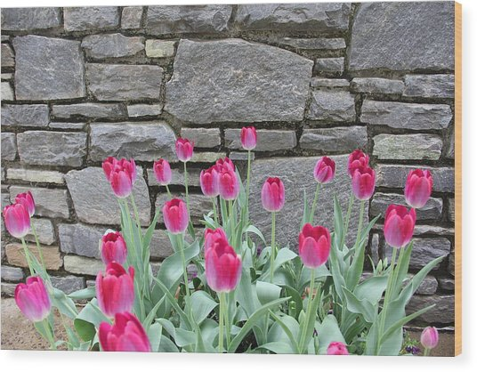 Fuchsia Color Tulips Wood Print