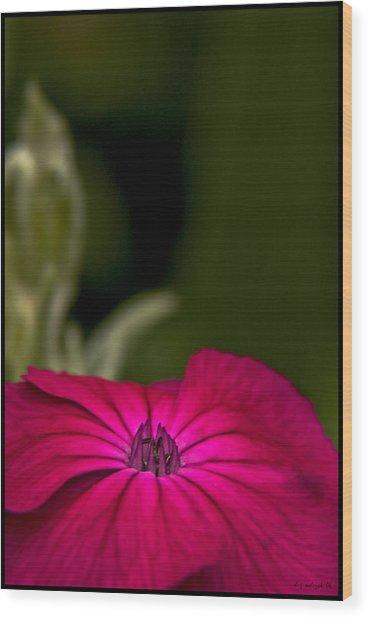 Fuchsia Delight Wood Print by Daniel G Walczyk